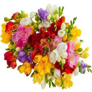 buchet fresia mix 300x300 - Acasă - Florarie Online Curtea de Arges