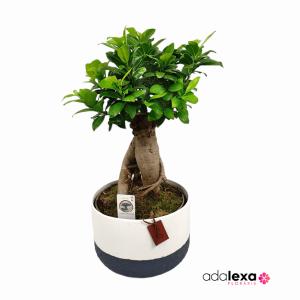 w bonsai xxl 300x300 - Acasă - Florarie Online Curtea de Arges