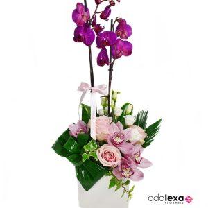 w ar phal cub roz 300x300 - Blog - Florarie Online Curtea de Arges