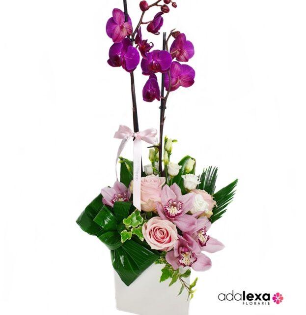 w ar phal cub roz