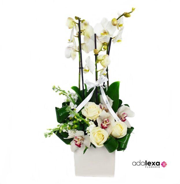 w orhidee in cub alb