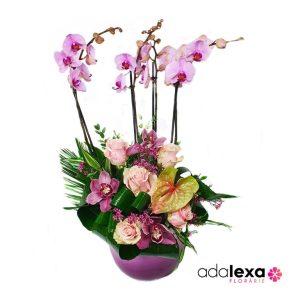 w orhidee xxl duo 300x300 - Blog - Florarie Online Curtea de Arges