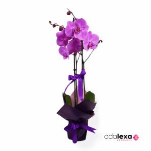w orhidee mov cadou 300x300 - Acasă - Florarie Online Curtea de Arges